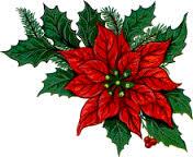 vianočná ruža 5