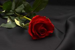 rose-1231354_960_720